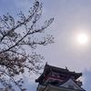 清洲城と五条川の桜🌸
