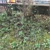 ♯1 ウッドデッキでお庭を快適に〜お庭リノベーション計画