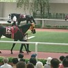 阪神競馬場初参戦