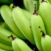 今注目される青バナナ、その理由とは