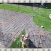 【DIY】100均の材料で「ドッグラン」を簡単に手作り♪愛犬を庭で自由に遊ばせたい♪