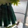 【メダカの学校】メダカの産卵床と水槽の掃除屋サカマキガイとラムズホーン