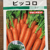 ミニニンジン栽培(プランター)・・・8月に種蒔きできる野菜、夏は日陰で良く育つ!