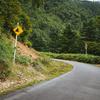 実は危険が多い!田舎での運転で怖い瞬間10選!