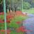 雨の中の【野の花】撮影☔