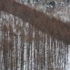 飛騨の冬景色 【平湯峠】