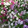 母の日からの~お花屋さん