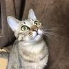 【猫ブログ】サラちゃんが元気になりました!