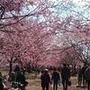 坂戸にっさい桜まつりに行ってきました♪