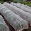 ブロッコリー類の最終植え付け