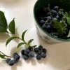 お庭のブルーベリーと頂きものの梨