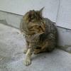 欠け耳のノラ猫 ~Tipped Ear Campus Cats~