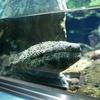 【写真付き展示生物リスト】井の頭自然文化園 水生物館