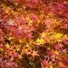 水景園の紅葉、見頃やライトアップ情報。