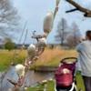 ネコヤナギ、春の訪れ告げる 4日「立春」