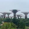 シンガポール旅行記5日目(リトルインディア、ガーデンズバイザベイ、Jewel)