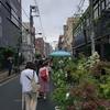 『お富士さんの植木市』 浅草 夏の風物詩