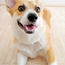 【薬の値段は?】犬猫用のフィラリア、ノミダニ予防はネット通販だと病院の半額以下で購入可能!