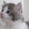 猫語を解読して毎日猫も人間の快適生活を♫