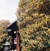 蓮長寺のキンモクセイ(10月上旬~中旬)