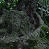 山崎宮の巨樹 福岡県遠賀郡遠賀町