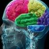 筋トレと脳機能(インスリン様成長因子(IGF-1)は、認知機能改善に関与するもう一つの神経栄養因子であり、運動でIGF-1レベルが増加するが、認知機能が低下した高齢者ではIGF-1は定値を示す)