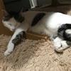 猫がボロボロにした襖をセルフ修理*4月