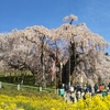 三春滝桜・さくらの公園・不動桜・地蔵桜