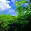 鎌倉・初夏のボタニカルカフェ