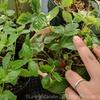 色とりどり?ひそかな楽しみリリオさんの植物コレクション