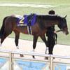 レクセランス 日本ダービーは石橋騎手