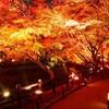 北野天満宮&紅葉ライトアップツアー【紅葉が織りなす絶景】