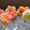 台風前のバラ達
