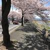 桜と団子のサイクリング