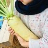 福祉交流農園で、冬野菜の収穫体験してきたよ。