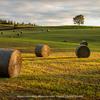 牧草ロールがある風景
