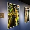 【ジェットダイスケ写真展「好きにさせてよ」】蝉の脱皮の迫力の大型写真再び。チェキプリントもユニーク #ジェットダイスケ