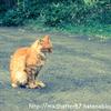 完璧じゃなくてもいい。挫折してもいい。猫背を通して気づいた続けるコツは〇〇すること。