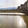 田んぼを見に行きました。