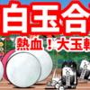 熱血!大玉転がし - [4]紅白玉合戦【攻略】にゃんこ大戦争