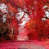 秋に聴きたいクラシック名曲集(人気、定番、作業用BGM)