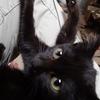 黒猫 名前を付けなきゃ A black cat