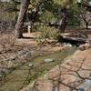 京都御苑の出水の小川。