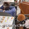 2021.7.10 【可愛いモフモフを見てるだけ‼️】 Uno1ワンチャンネル宇野樹より