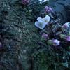 Südparkでちょっぴりお花見