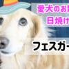 犬の散歩の日焼け防止にフェイスガードを購入