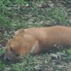 「けものフレンズ3」に登場する動物が見られる動物園・水族館