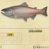 【あつ森】「キングサーモン」の釣れる場所・出現時期・時間帯情報まとめ【あつまれどうぶつの森】