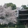 ホテル椿山荘東京の庭園で桜を鑑賞しました