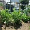 2つの菜園プロジェクト